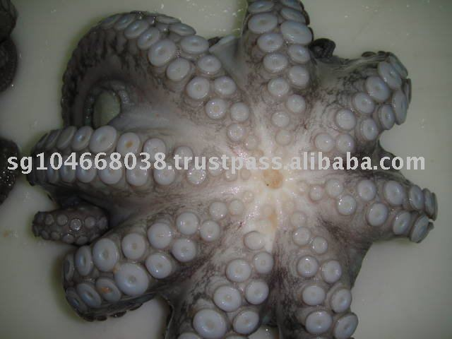 OCTOPUS WHOLE CLEANED FLOWERBALL