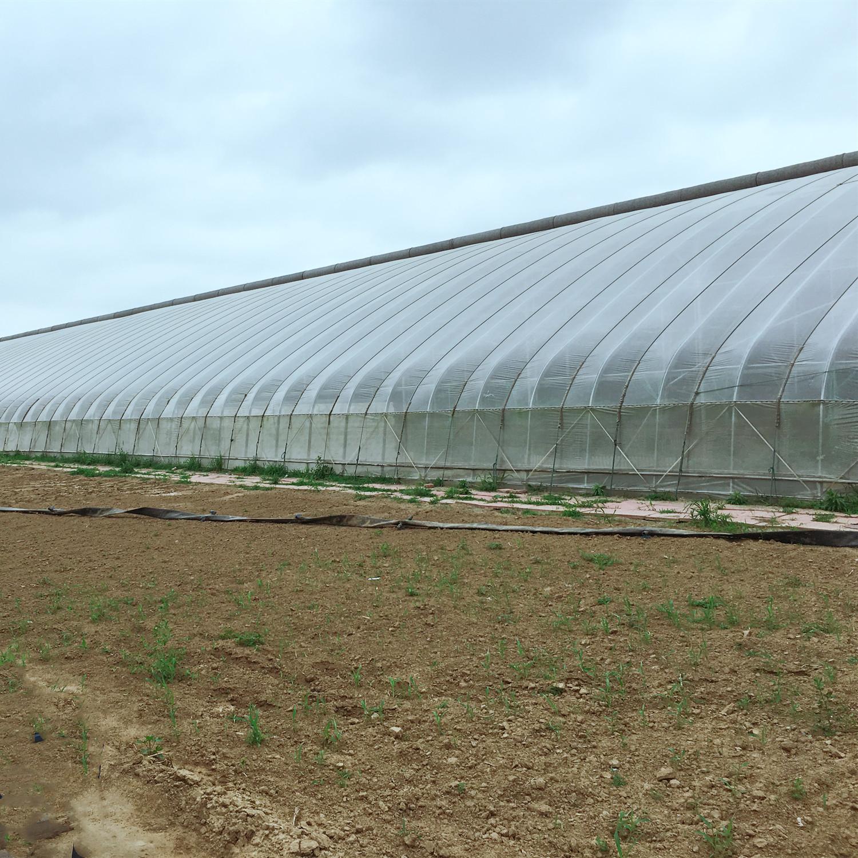 Сельскохозяйственные одиночный пролет арочного типа парниковая пленка для продажи