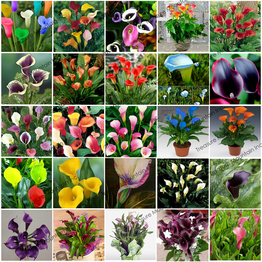 Lily Type Plants: Popular Lily Flower Types-Buy Cheap Lily Flower Types Lots
