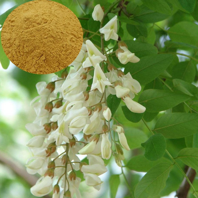 100% Pure Rutin P.e Sophora Flower Japonica Extarct - Buy Sophora Japonica  Extract,Sophora Flower Extarct,Pure Rutin P.e Product on Alibaba.com