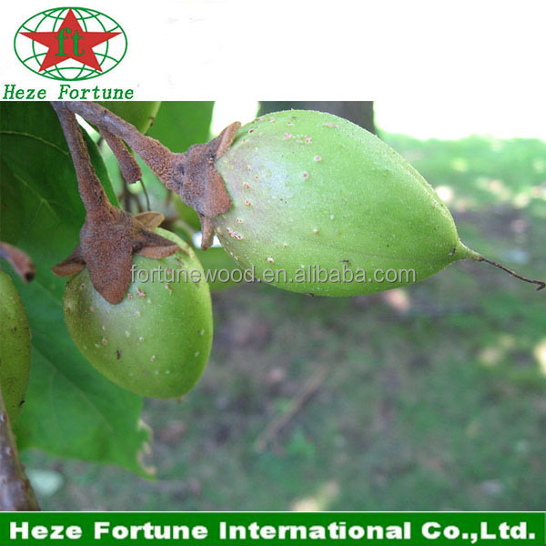 Cold resistant paulownia Z07 seeds with certificate
