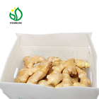 fresh ginger export/ginger suppliers