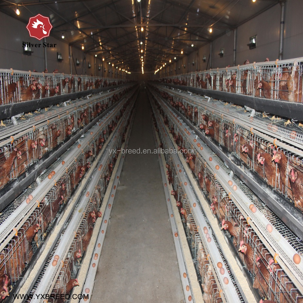 Chicken Farm Project Poultry Farming Equipment For Sale Buy Poultry Farming Equipment Chicken Poultry Farming Equipment Poultry Layer Farming Equipment Product On Alibaba Com