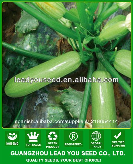 Semillas De Calabaza Híbrida Jsq03 Jade Verde Semillas De Calabaza F1 Para La Siembra De Semillas Buy Semillas De Calabaza F 1 Product On Alibaba Com