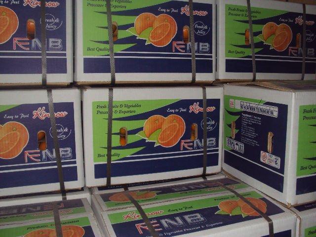 kinnow High quality Mandarin Orange Malta Citrus From Pakistan