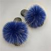 Raccoon blue
