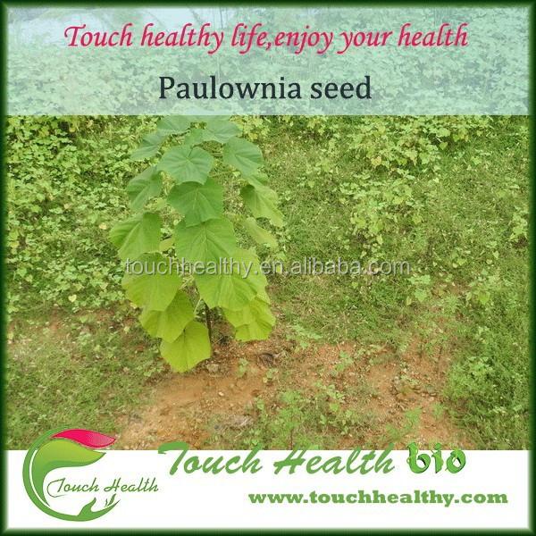 2021 Good quality paulownia elongata seeds