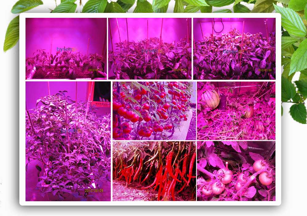 ec1815cfc94e 54W Flower Led Light E27 AC85-265V full spectrum led plant grow lamp For  Phrase Flower Plant Hydroponics System   Grow Box BJ - us314