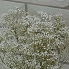 beautiful decoration artificial flower baby s breath from China