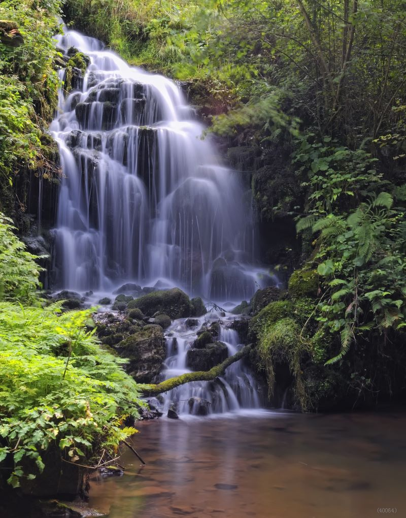 Fashion Art Customized Jungle Waterfall Photography