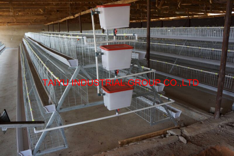 Poultry farming business plan in nigeria now