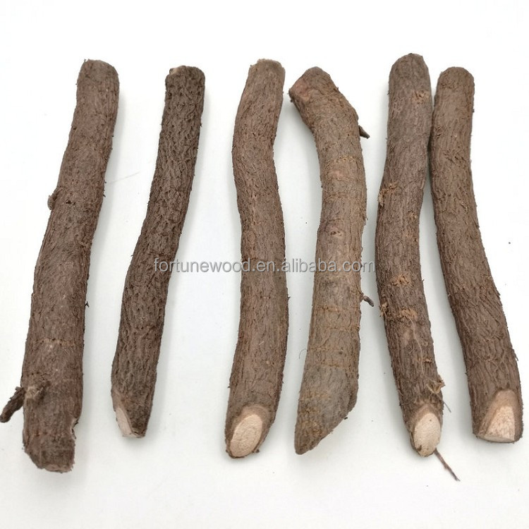 Grade A intercropping and cold resistant paulownia shantong root seeds