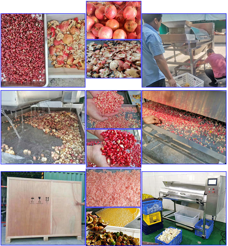 Pomegranate Juice Processing Machine Pomegranate Peeler Deseeder Machine