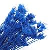 Kraliyet mavi