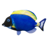 Electric blue spurfish