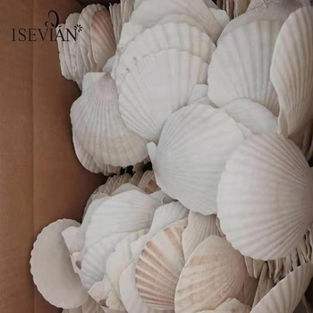 ISEVIAN Polished conch shell 5cm-14cm White natural Sea Shell