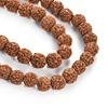 CJ02834 Rudraksha Beads