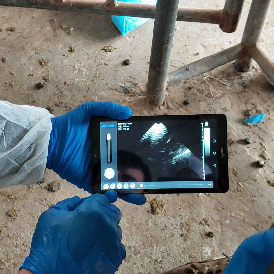 High Quality Sheep Goat Pig pregnant testing wireless ultrasound probe scanner for Small Big animals