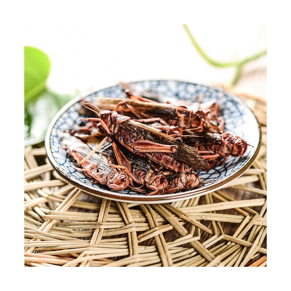 Съедобные насекомые, богатые питание, корм для животных, насекомые, эко, свежий Кузнечик