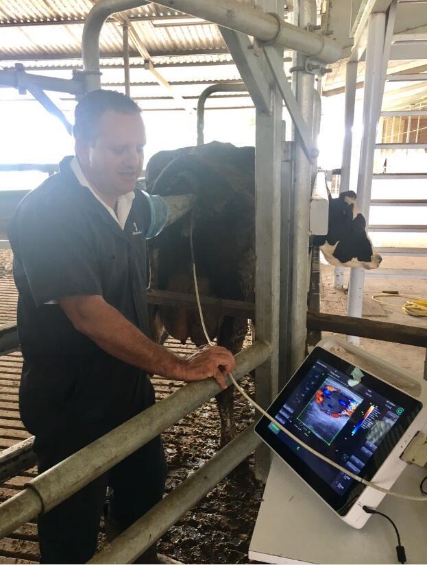 Допплер ветеринарный сенсорный MSLVU45 Vet, ультразвуковая система, тест на беременность для коров/лошадей/овец/свиней