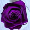 アンティーク紫