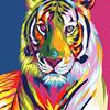 Colors 5