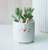 rabbit flower pot