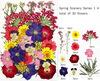 spring color 30pcs