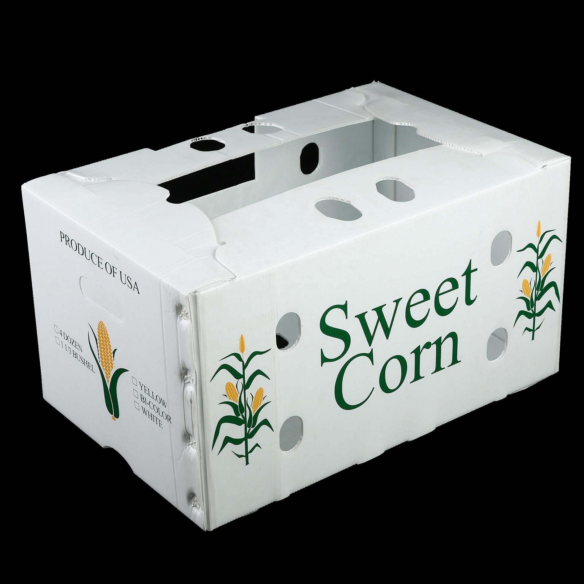 Polypropylene Corrugated Plastic coroplast Box plastic Sheet Fruit vegetable box