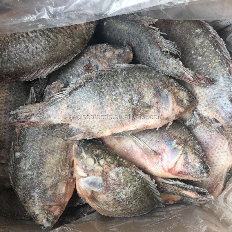 Замороженная Тилапия от рыбных компаний