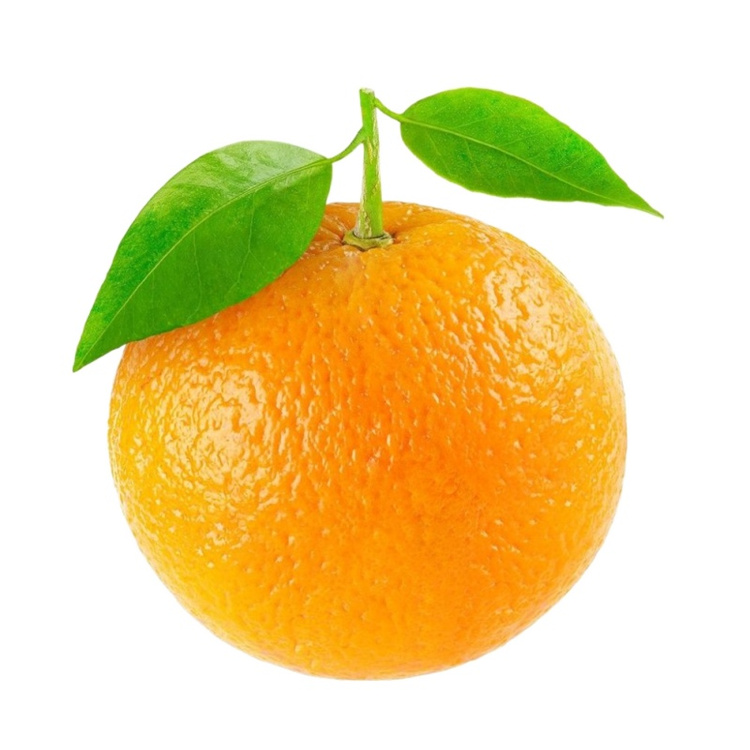 Wholesale Tangerine Ornament Oranges Sweet Oranges Valencia Orange Fresh