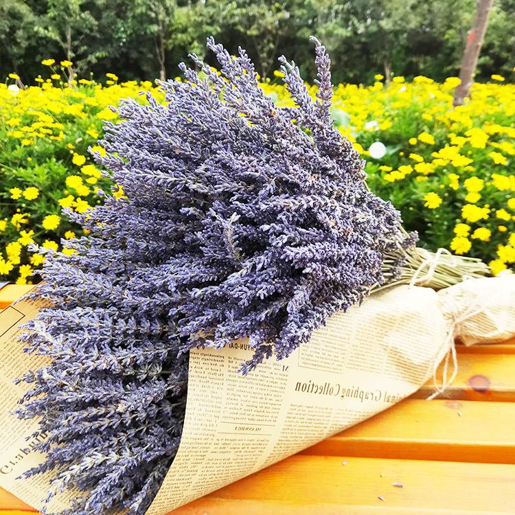 Musim Panas Flora Bunga Alami Florist Perlengkapan Ungu Bunga Kering Lavender Untuk Dekorasi Rumah Buy Kering Lavender Bunga Kering Dekorasi Bunga Product On Alibaba Com