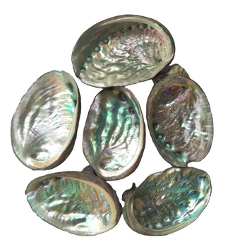 Hot Sale Wholesale Price Natural Polished Rainbow Color Abalone Shell Flashy Light small Size Abalone Shells Crafts