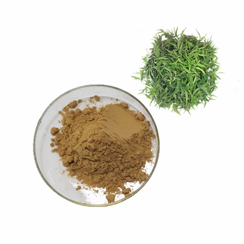 Factory supply sabah snake grass extract Drooping Clinacanthus Extract Sabah Snake Grass