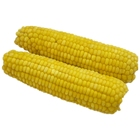 Natural and fresh delicious grains full and sweet waxy corn