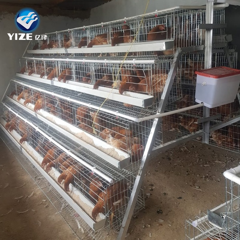 Automatic Poultry Farming Equipment Chicken Water System And Feeding System Welded Cage Galvanized Wire Provided Silver White Yz Buy Automatic Poultry Farming Equipment For Breeder Broiler Turkey Chicken Farm Farm Poultry Equipment For Sale Poultry Layer