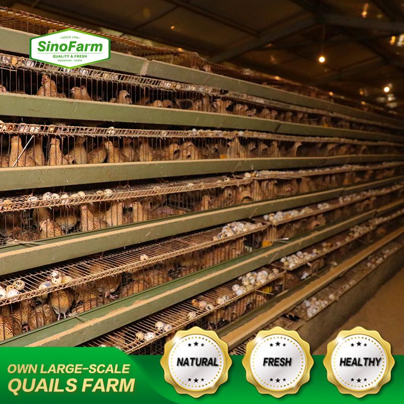 Консервированные перепеловые яйца в рассоле из Китая, 425 г, 850 г, 3 кг