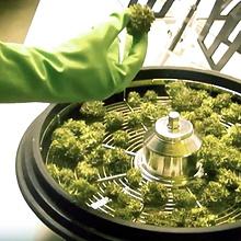 Leaf bowl bud trimmer machine hydroponic leaves trimmer small commercial handy leaf bud trimmer
