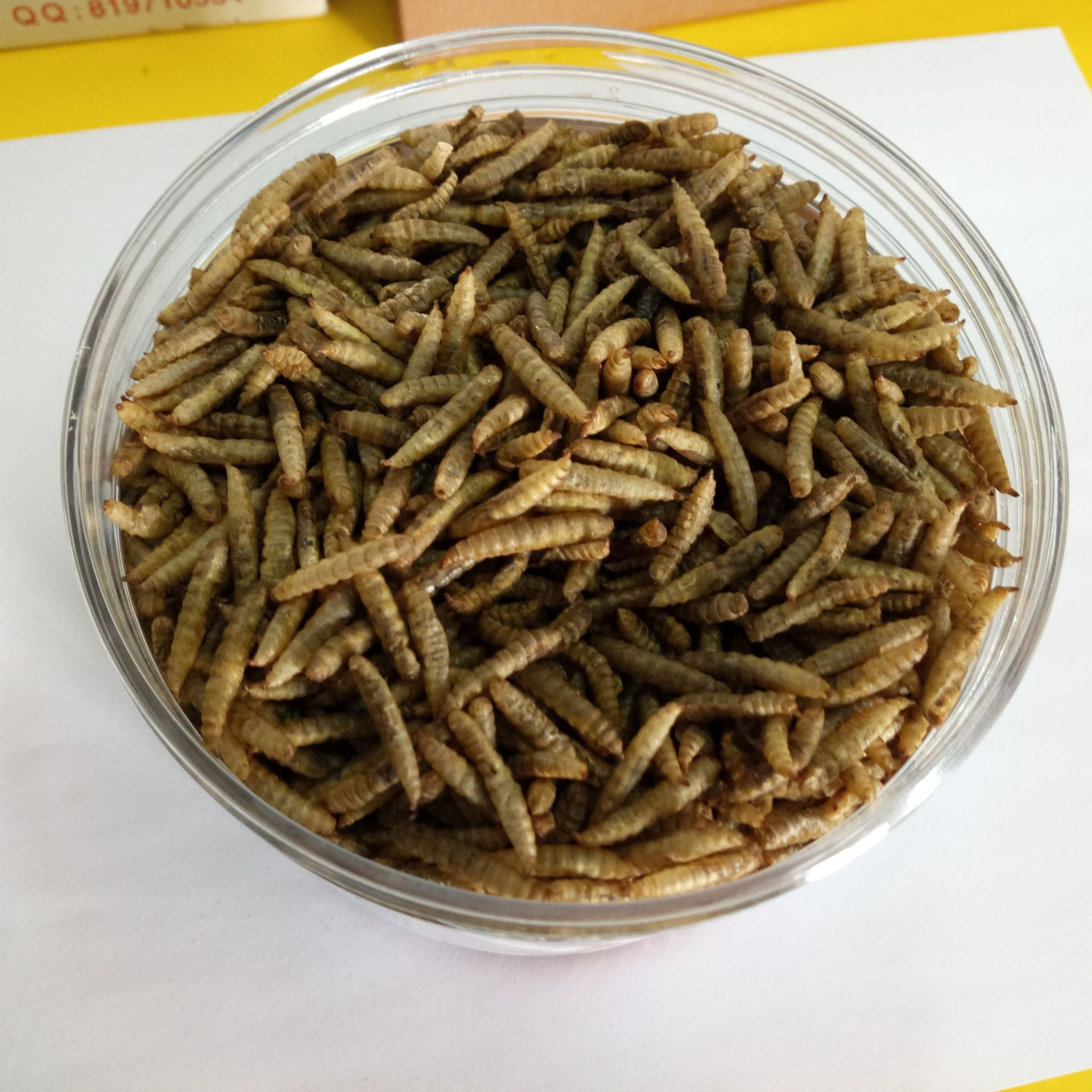 Factory price wholesale black soldier fly larvae production black soldier fly farming