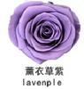 Lavenple