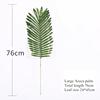 Large areca palm