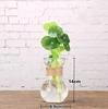 Hyacinth hydroponic vase