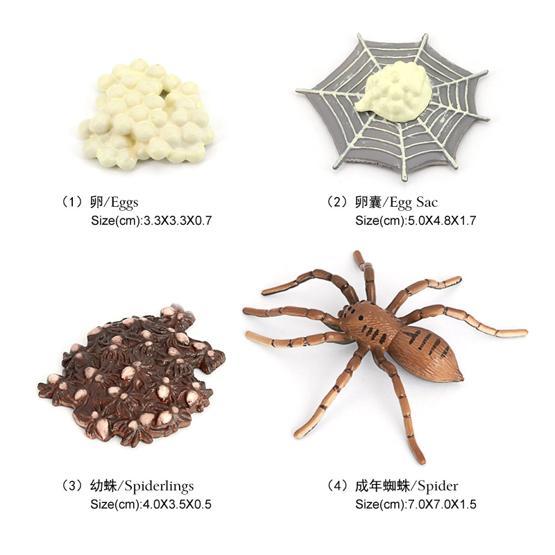 Wholesale Solid PVC Model Animal Figurines Butterfly Froy Spider Life Cycle Figurines