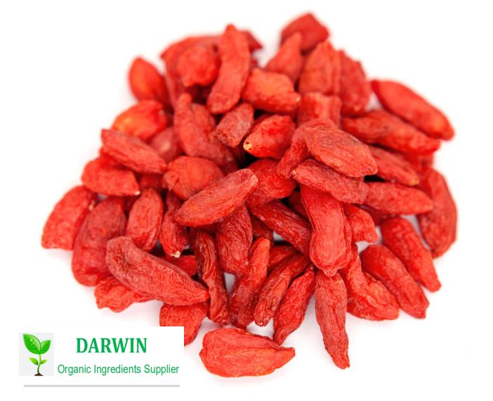 Оптовая продажа высокого качества ягоды Годжи Сушеные ягоды Годжи