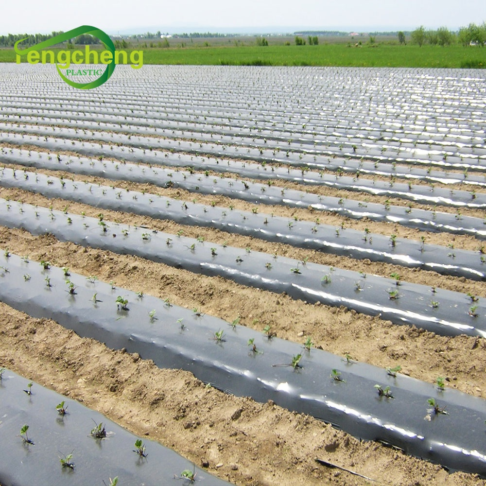 2020 35 микрон для сельского хозяйства, Полиэтиленовая биоразлагаемая полировальная пленка, пластиковая Мульч-пленка для теплиц