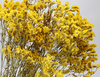 crystal yellow grass