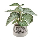 Wholesale High Quality Real Touch Artificial Leaf Plant Potted For Home Decor