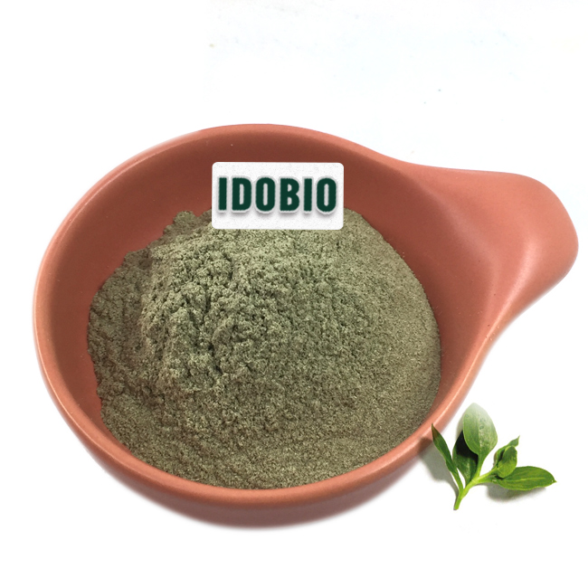 Herbal supplements Andrographis paniculata powder