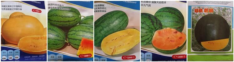 2021 новые семена Moso Bambaoo, большие семена бамбука для посадки