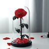 الأحمر-لا هدية مربع